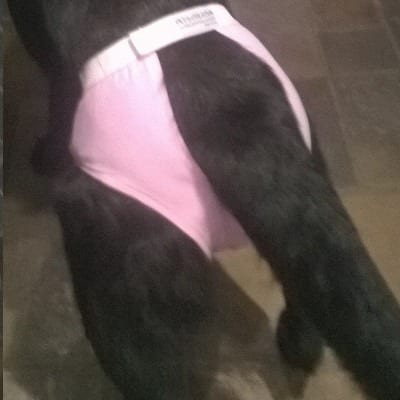 Løpetidstruse Valentino rosa og svart str 25 -60cm