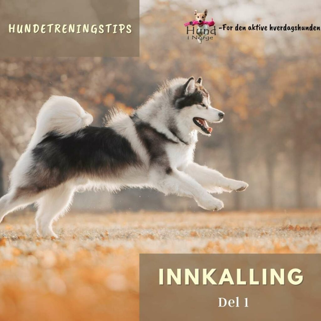 hverdagslydighet innkalling hund i norge blogg