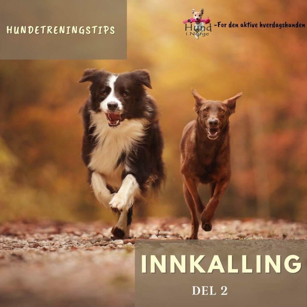 innkalling hund i norge hverdagslydighet