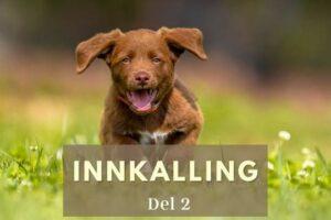 innkalling del 2 hund i norge