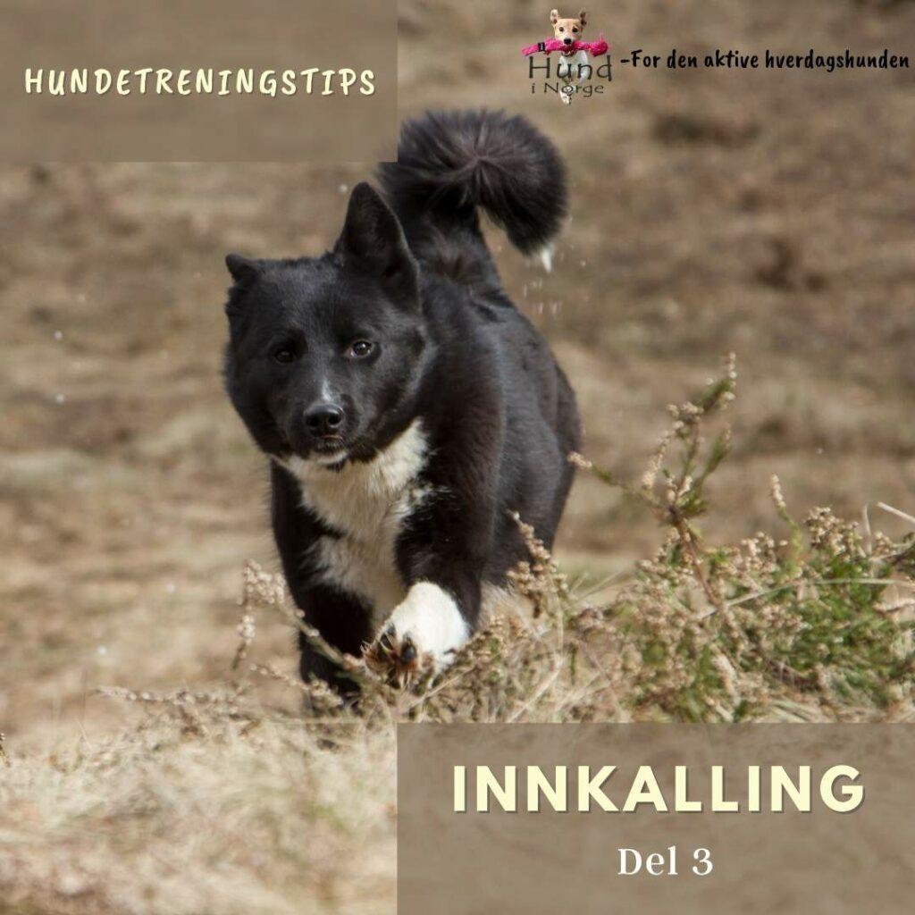 blogg hund i norge innkalling