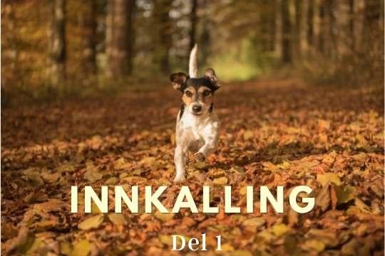 Innkalling del 1 hund i norge hverdagslydighet