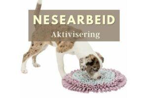 nesearbeid aktivisering hund i norge