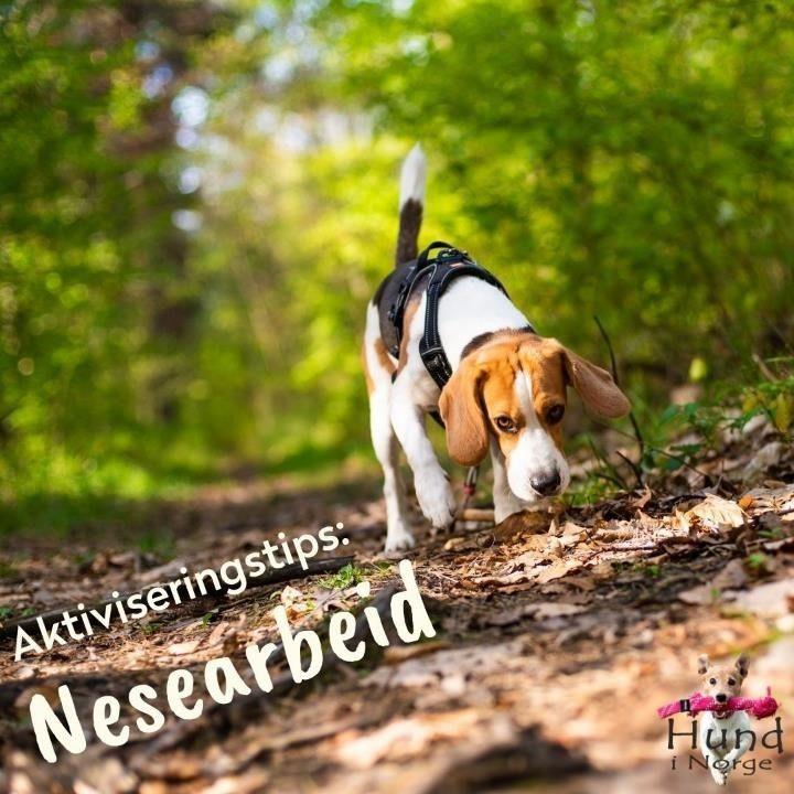 aktiviseringstips nesearbeid hund i norge