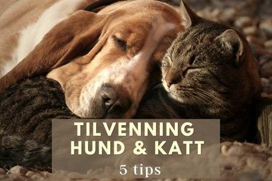 Tilvenning hund og katt blogg