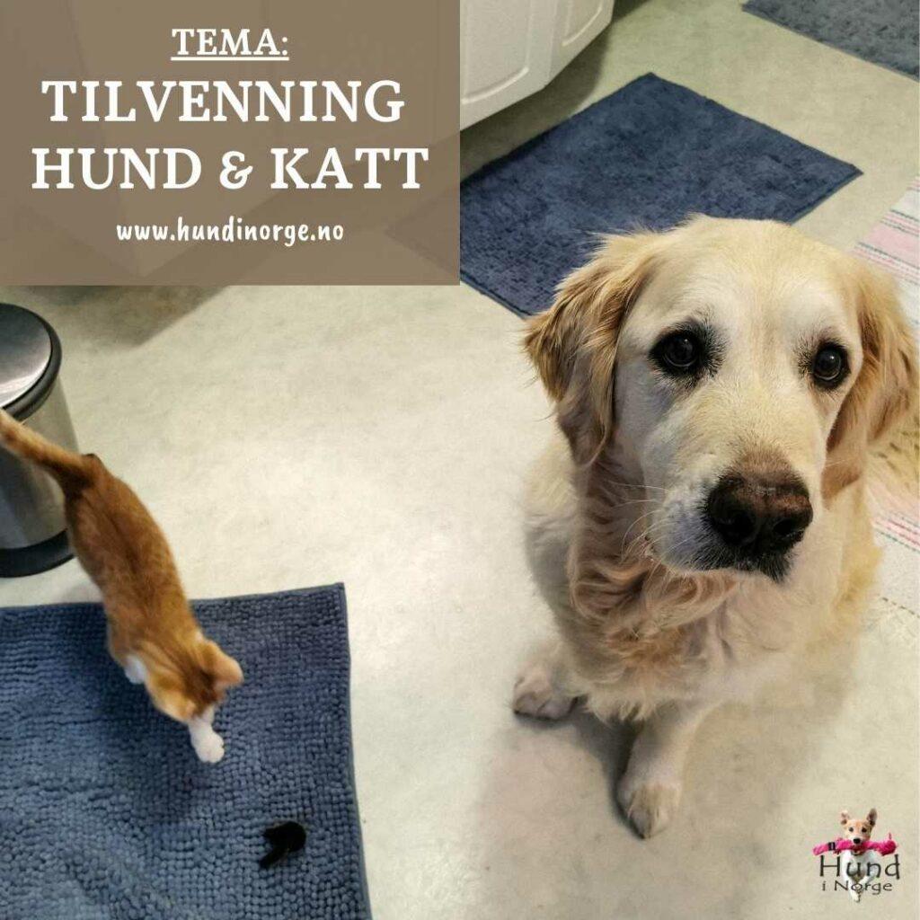 blogg tilvenning hund og katt