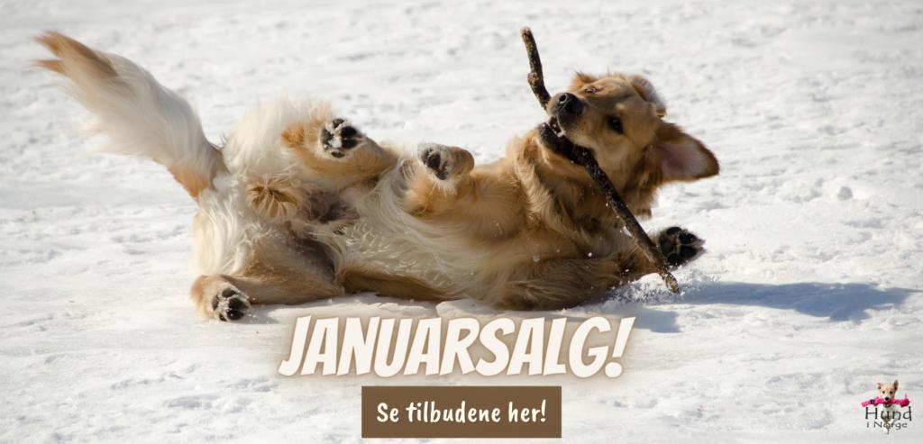 Januarsalg hund i norge