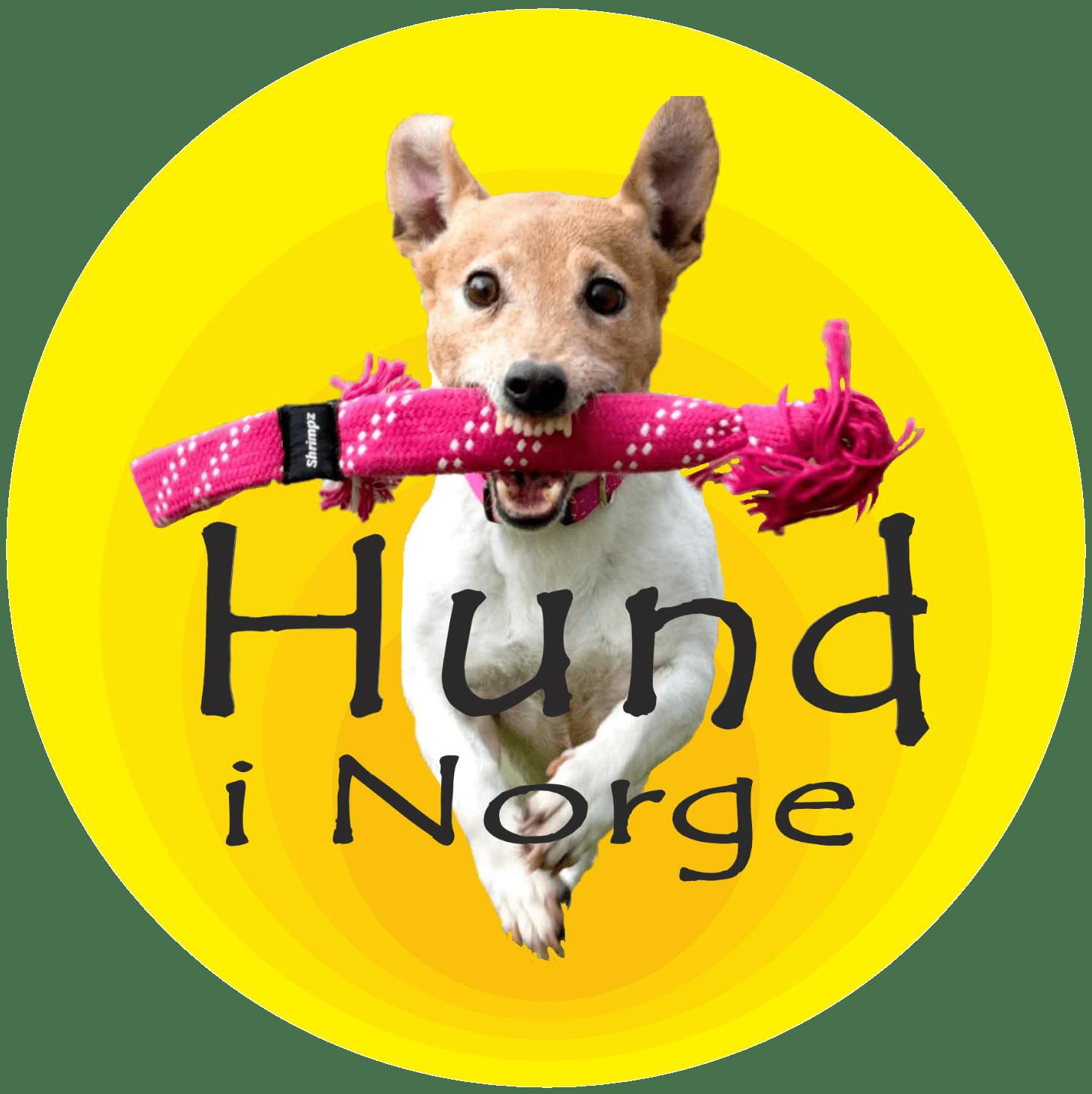 Hund i Norge