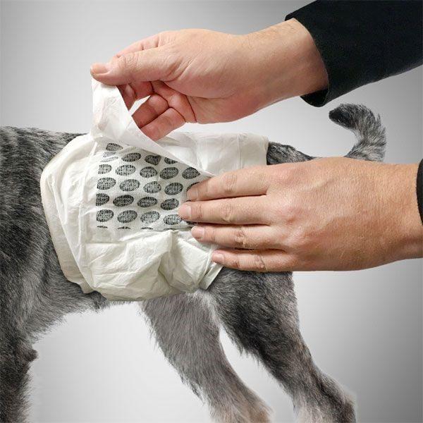 Engangsbleie, magebelte hannhund Simple Solution