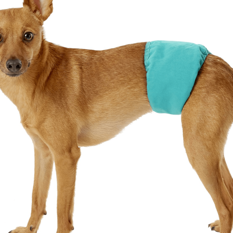 Magebelte hannhund Simple Solution, vaskbar