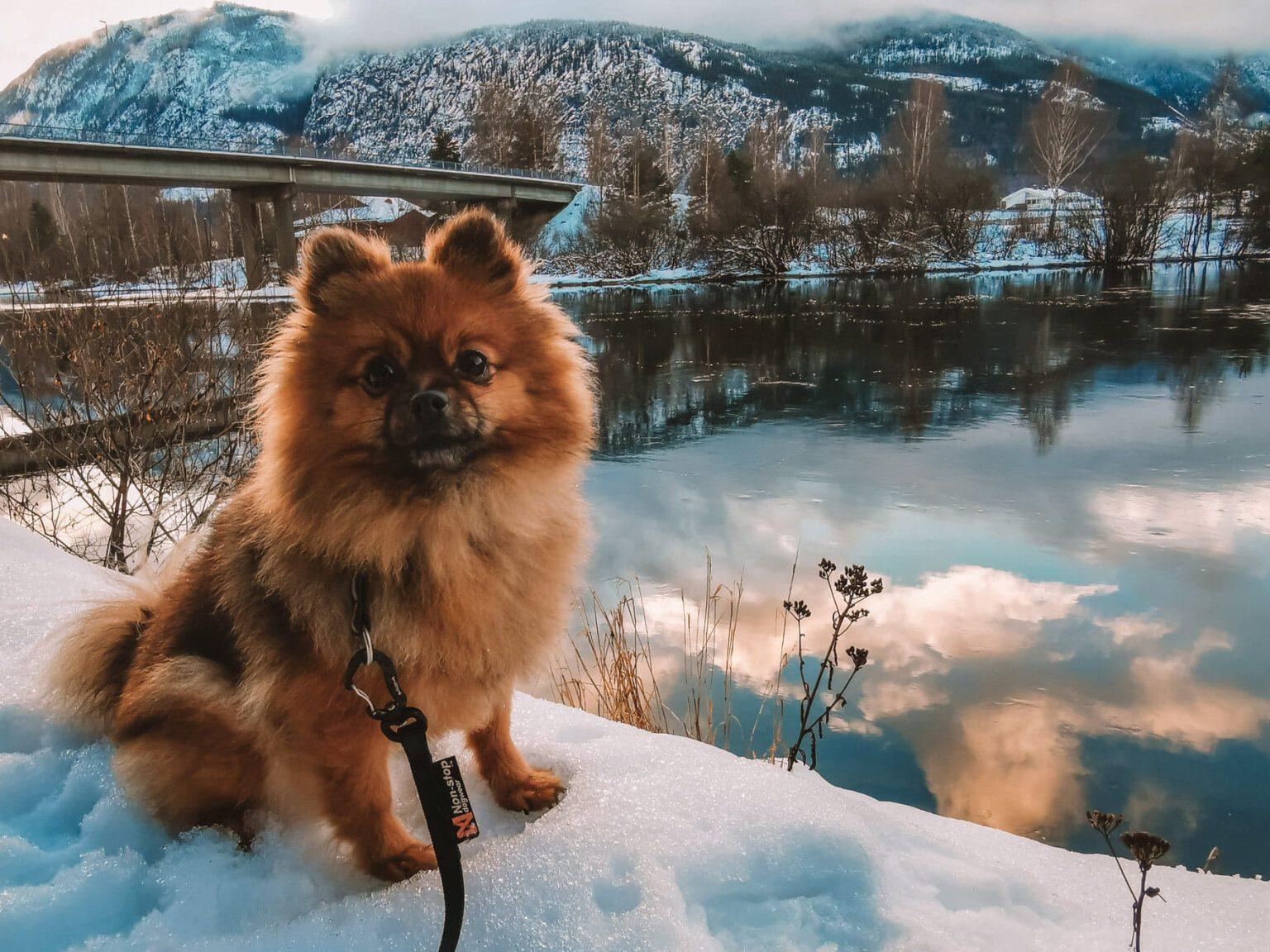vinter kulde hundeblogg