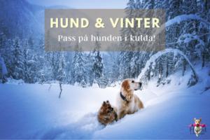 hund vinter kulde