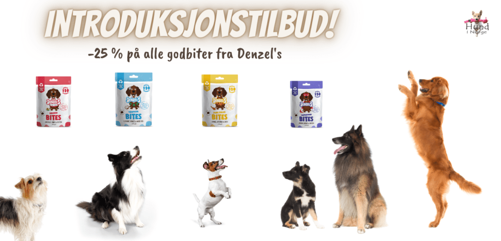 introduksjonstilbud denzel hundegodbiter