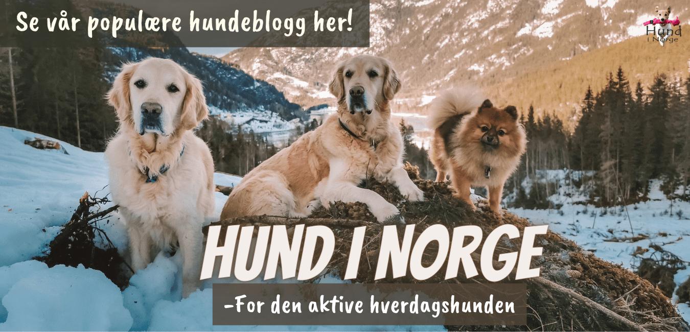 Hund i Norge hundeblogg