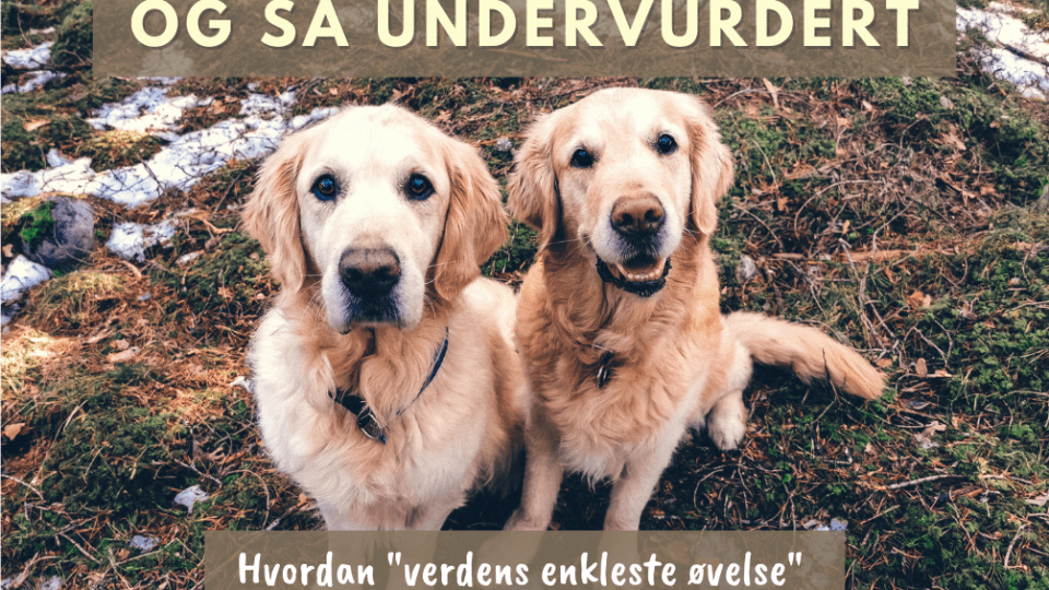 Sitt hundebloggen Hund i Norge