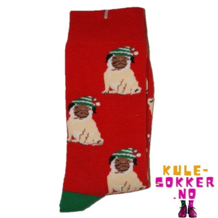 Hund sokk med lue