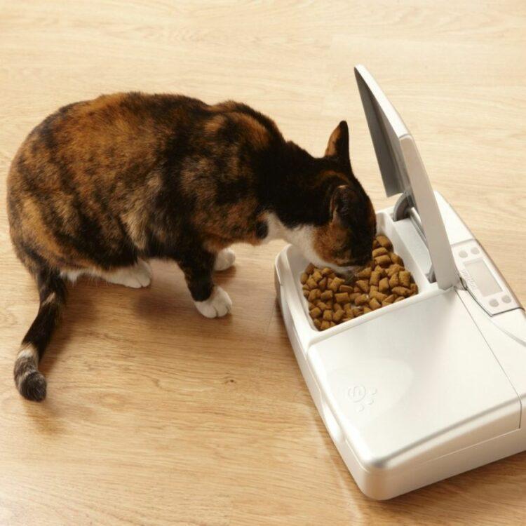 Petsafe Staywell forautomat til hund og katt digital timer