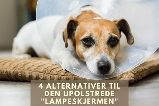 hundeblogg hundehelse lampeskjerm hundeskjerm