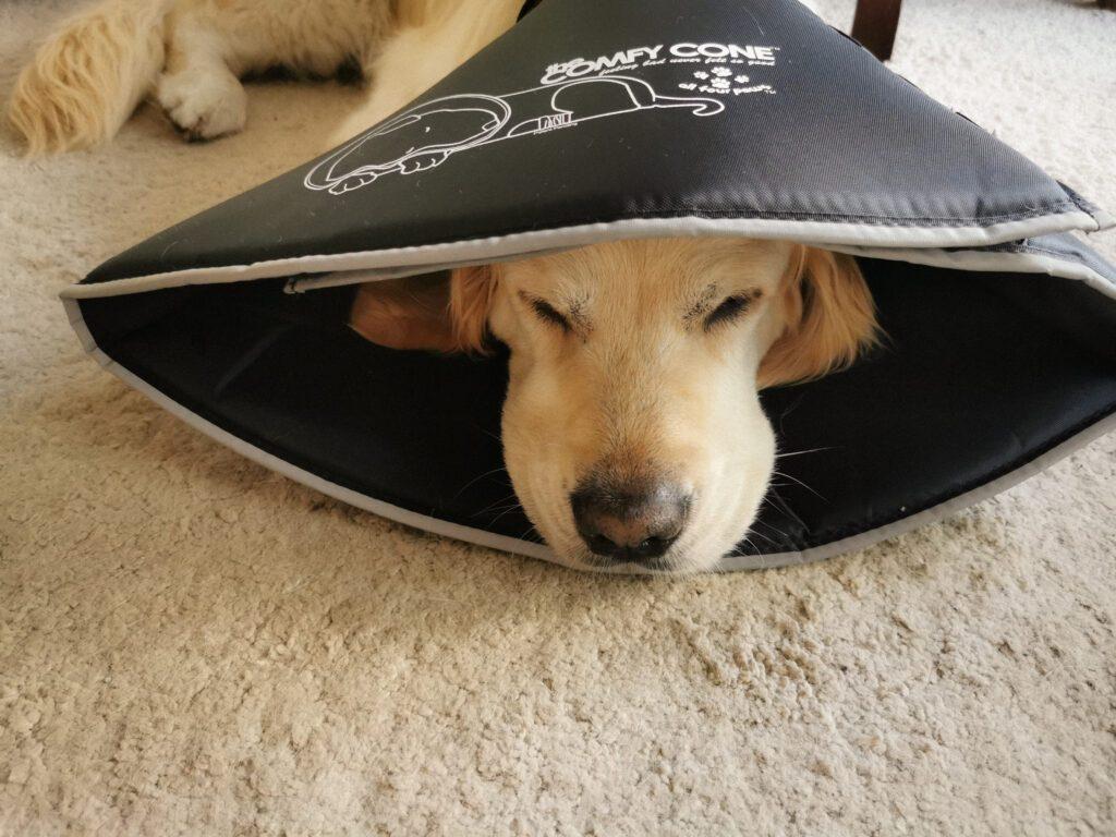 Småen med The Comfy Cone