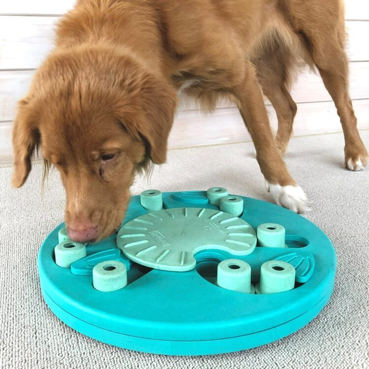 nina ottoson dog worker composite aktivitetsleke hundeleke
